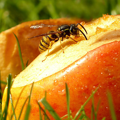 Tips på hur du undviker getingar!
